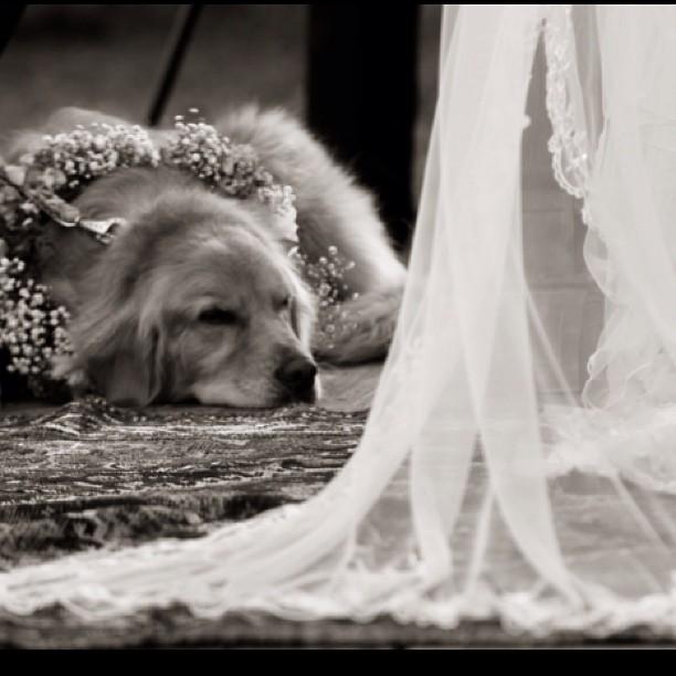 A linda Manu aos pés de sua dona (ela ficou no altar ao lado da mãe da atriz durante toda cerimônia)